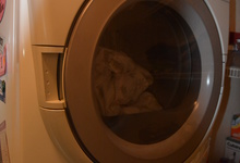 1845 Alburn Place , El Dorado Hills, California, 95762 Listing: Laundry Room Dryer Photo by Homeowner