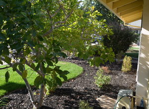 987 Main Street , Roseville, CA, 95874 Listing: Front Yard Photo by Real Estate Agent